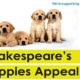 Avonlea Stratford Guesthouse supports Guide Dog Appeal