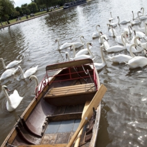 Local attractions for Stratford Bed and Breakfast